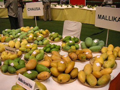 mango-sample2.jpg