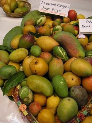 mango-sample3.jpg