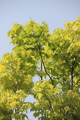 tree200414.jpg
