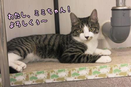 ミミちゃん20140228-01