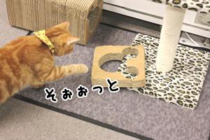 豆太郎20140308-02