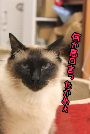 あぽろ20140314-02