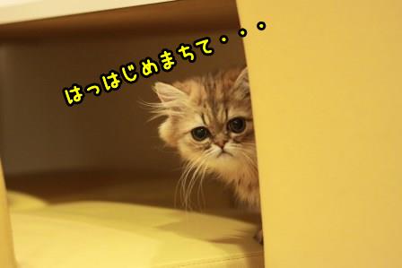 ぷるぷる20140315-01