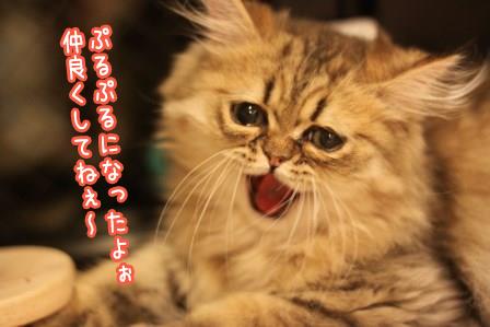 ぷるぷる20140419-02