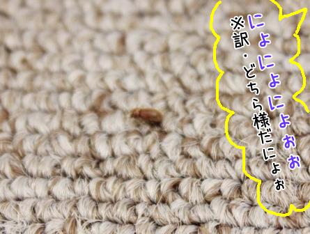 珍客20140625-02