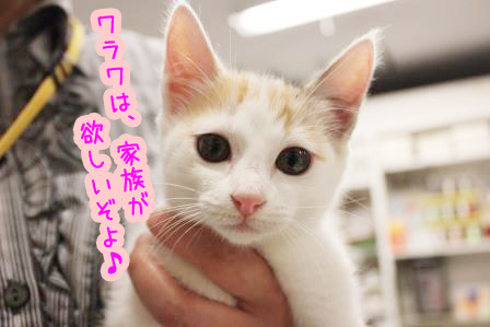 ヒミコ様20140625