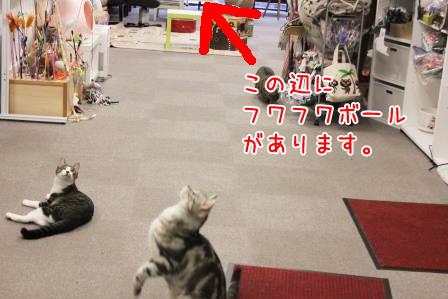 文ちゃん20140627-01