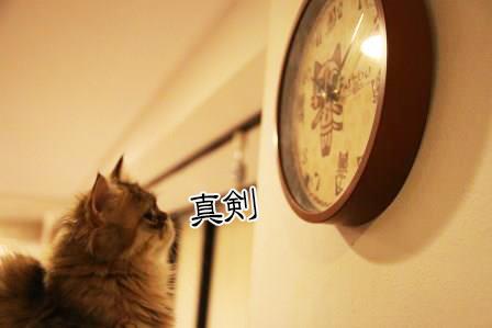 ぷるぷる20140702-03