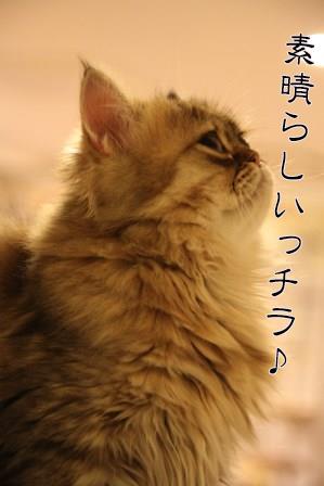 ぷるぷる20140702-04