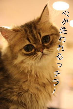 ぷるぷる20140702-05