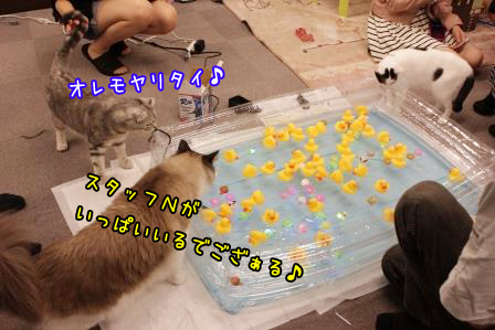 縁日20140706-03