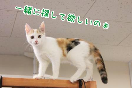 ヒミコ20140718