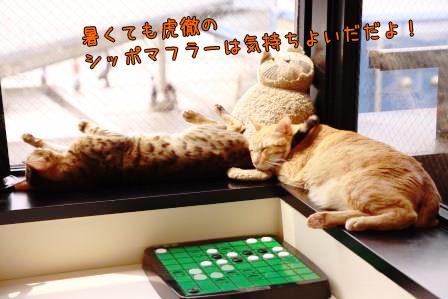 ちゃんぷ20140729