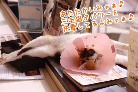 ミケヲ20140729