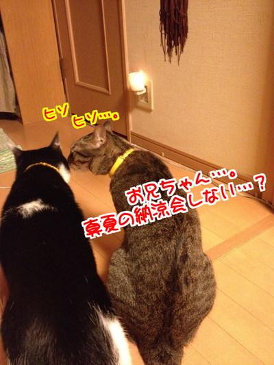 73zatM8ikX_Kobe1406642144_1406642354.jpg