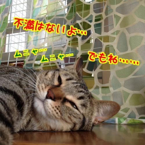 BXXoNXEjg6R8CaH1397188741_1397188988.jpg