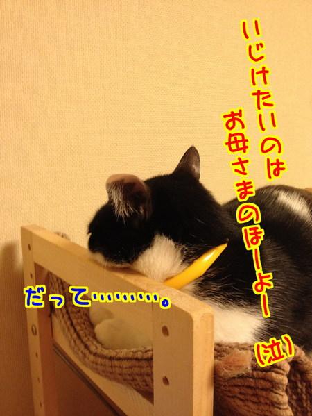 GURo_hqA488IFgj1397484230_1397484559.jpg