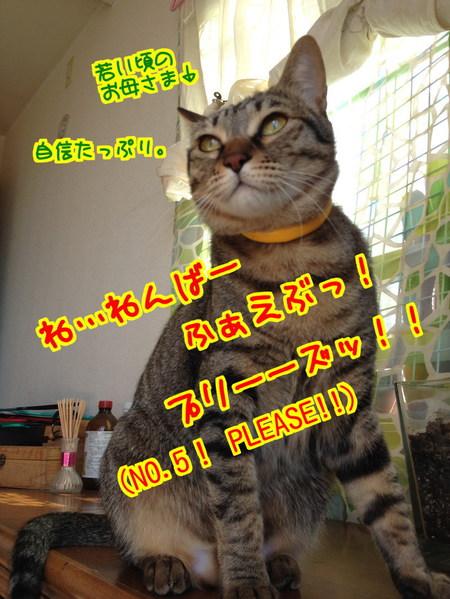 MwyU_e010FQF5p71394191799_1394192317.jpg