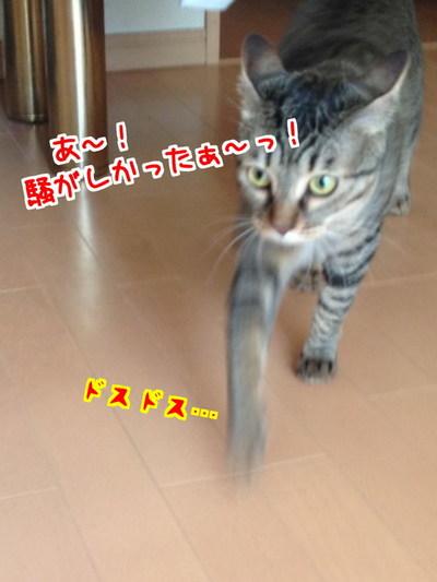 RIc25BvBz8mK62g1403359787_1403360084.jpg