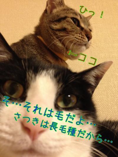 WAMKLgLW_convert_20140509231251.jpg
