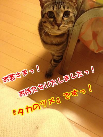 cn2rzP0YWVfqcap1402319706_1402319907.jpg