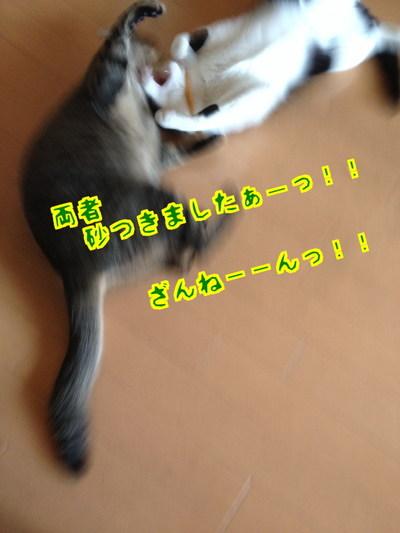 e8ztQ8eiHZos4Pe1400320351_1400320486.jpg