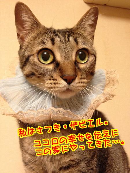 eYz2uPGSuDmDN0B1396101434_1396102064.jpg