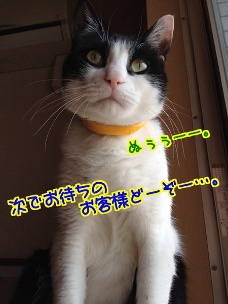fQK_KT64m69fkFv1396360286_1396360585.jpg