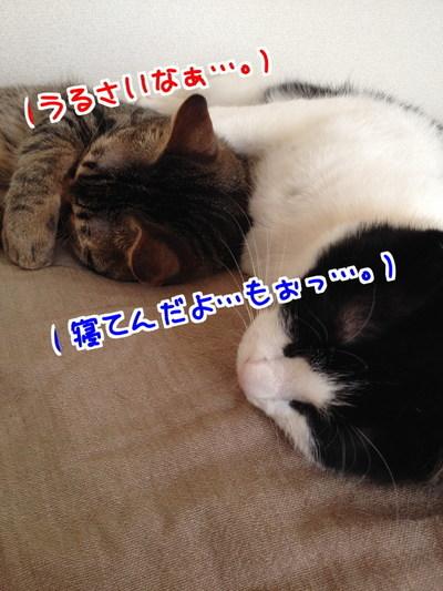moPzbtHM3FjUwfj1403531647_1403531963.jpg