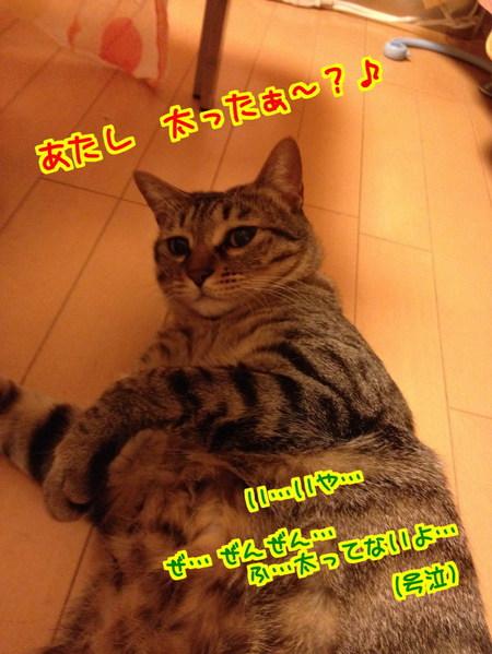 nrRJr4_ZcbczXXP1394946858_1394947206.jpg