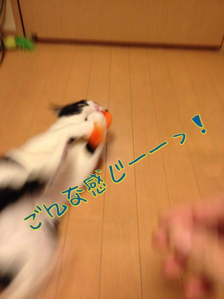 sDfVZ9YY_convert_20140502193411.jpg