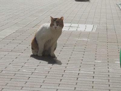 ソニー猫1