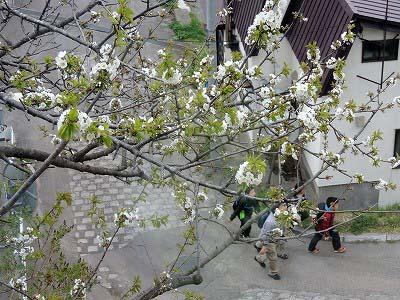 さくらんぼの木の下をDSCN1929
