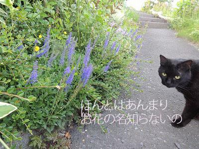 ②ほんとはDSCN2489