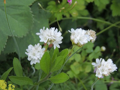 ⑱白い花DSCN2520