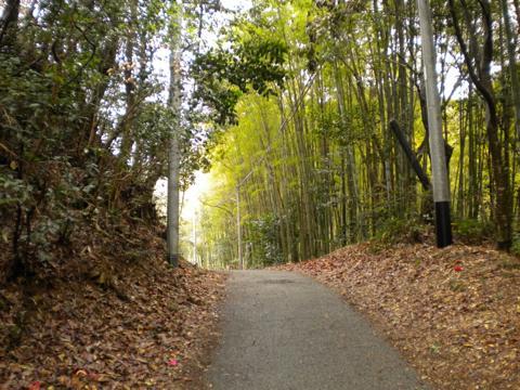 _kimokawa009.jpg