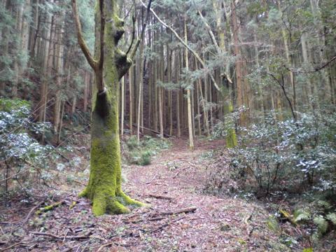 _kimokawa078.jpg