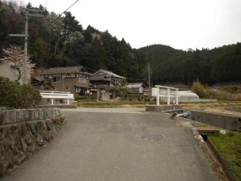 _miyama205.jpg
