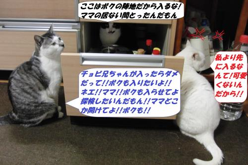 CIMG5663_convert_20140227075930.jpg