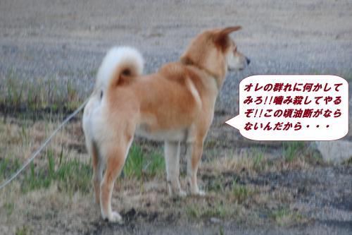 CIMG5781_convert_20140503103729.jpg