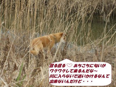 IMG_1649_convert_20140305074857.jpg