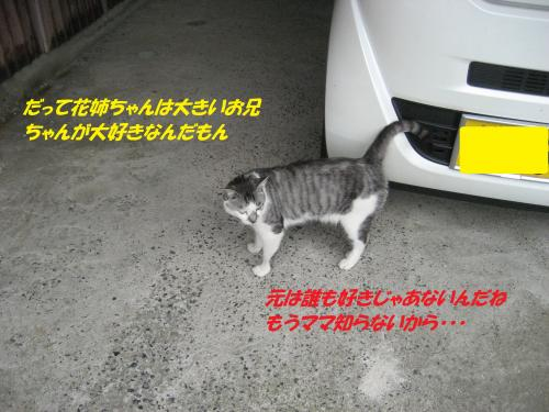 IMG_1804_convert_20140823090711.jpg
