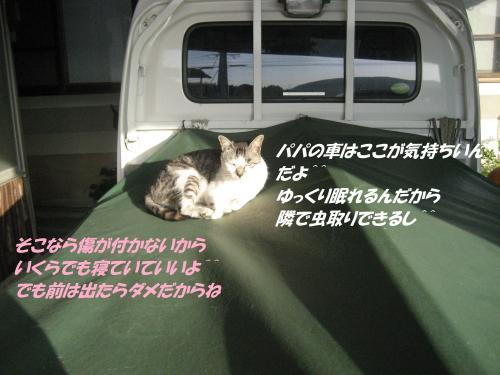 IMG_1810_convert_20140823091505.jpg