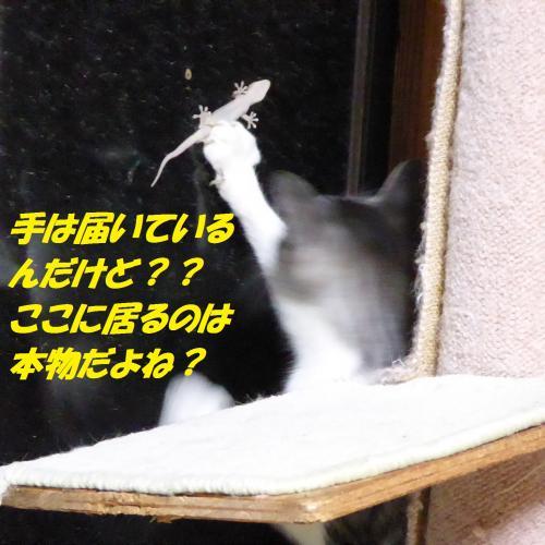 P1010504_convert_20140829131356.jpg
