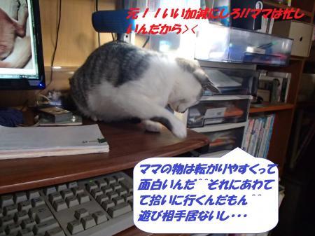 P2130707_convert_20140213075400.jpg