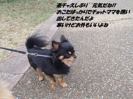 P2130725_convert_20140214080321.jpg