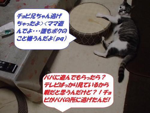 P2150732_convert_20140215081403.jpg