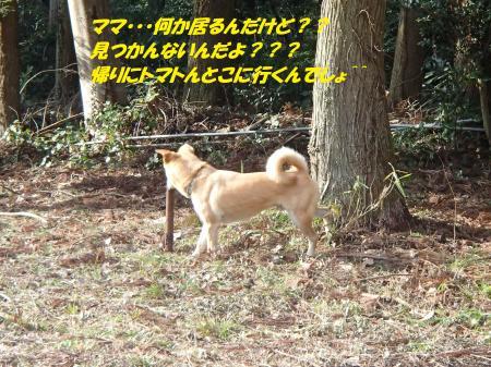 P2150737_convert_20140216080222.jpg