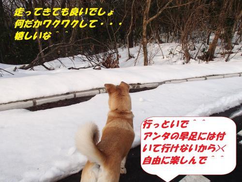 P2240925_convert_20140225074414.jpg
