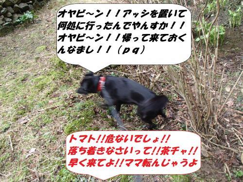 P3010978_convert_20140302081606.jpg